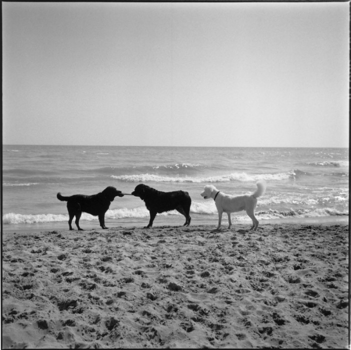 3_dogs_