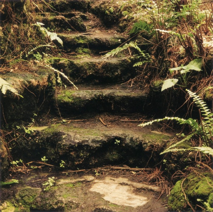 Fern Room Stairs