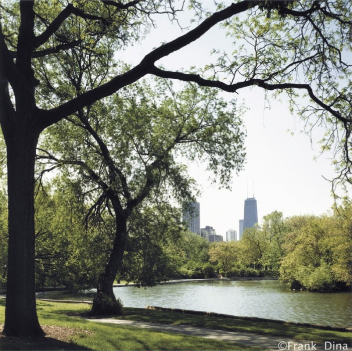 Lincoln Park View