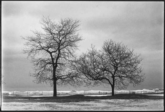 Rogers_trees1a